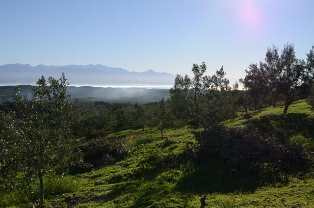 Оливковая роща Olivi