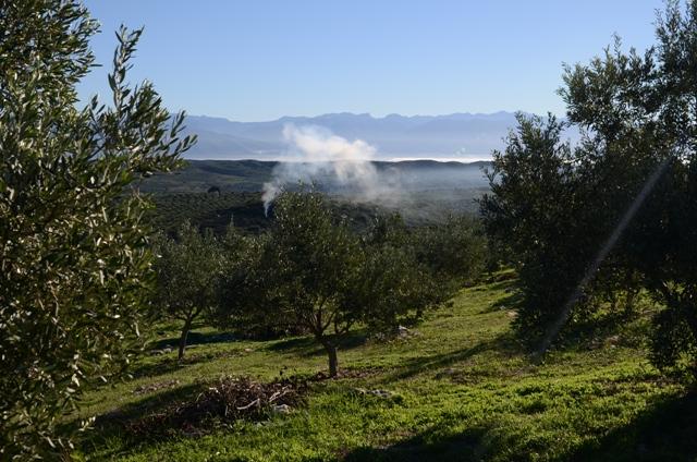 Вид на горы Спарты прямо из плантаций Olivi